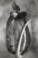 2019 Group Show: Beth Moon – Nepenthes Tomoriana