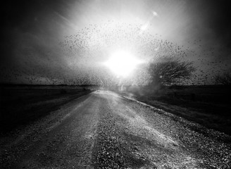 Angela Bacon-Kidwell: Morning Noise 2, 2014