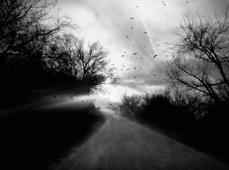 Angela Bacon-Kidwell: Narrow Escape, 2013