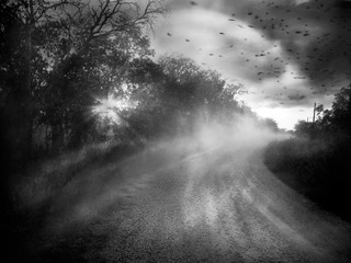 Angela Bacon-Kidwell: Chasing Hope, 2013