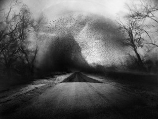 Angela Bacon-Kidwell: A Quiet Echo, 2013