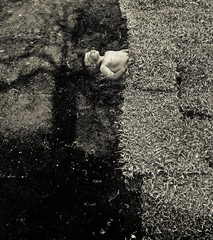 Angela Bacon-Kidwell: Spring, 2009