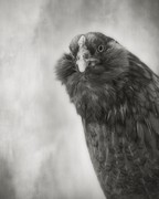 Beth Moon: Augurs and Soothsayers