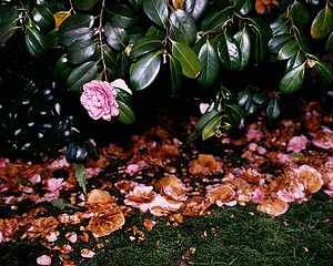 Birthe Piontek: Untitled #2 from the series Sub Rosa