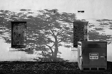 Charity Vargas: Tree Shadow at Thornberg, 2007