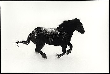 Claudio Cambon: Ghost Horse: Spring Blizzard, 1999