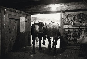 Claudio Cambon: Leaving the Barn to Feed, 1999