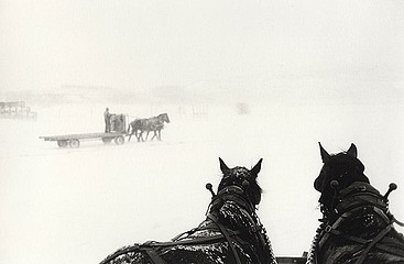 Claudio Cambon: Draft Horse Teams, Approaching Storm, 1999