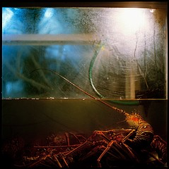 Colleen Plumb: Lobster, 2006