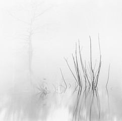 Rendezvous with Light: David H. Gibson - Reeds with Cypress, Village Creek, Texas, 1987