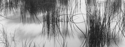 Rendezvous with Light: David H. Gibson – Reeds #2, Colorado Rocky Mountains,, 2005