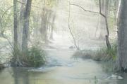 David H. Gibson: Morning Along Cypress Creek