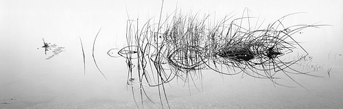 David H. Gibson: Reed Crescendo, Eagle Nest Lake, New Mexico, 1991