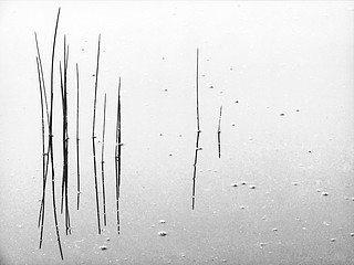 David H. Gibson: Reeds #6, Colorado Rocky Mountains, 2005