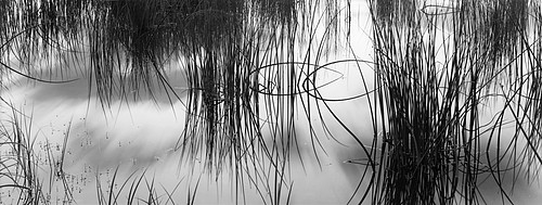 David H. Gibson: Reeds #2, Colorado Rocky Mountains, 2005