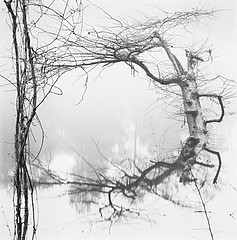 David H. Gibson: Vine and Tree, Village Creek, Texas, 1987