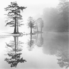 David H. Gibson: Cypress Islands, Village Creek, Texas, 1987
