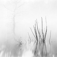 David H. Gibson: Reeds with Cypress, Village Creek, Texas, 1987