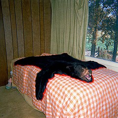 Drex Brooks: Bearskin Rug, Oregon, 1982