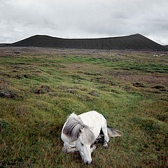 Drex Brooks: Sleeping Pony, Iceland, 1980