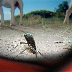 Drex Brooks: Stinkbug and Dogs, Utah, 2000