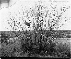 Drex Brooks: Bird Nest and Paper Cup, Ak-Chin Maricopa Reservation, Arizona, 1997