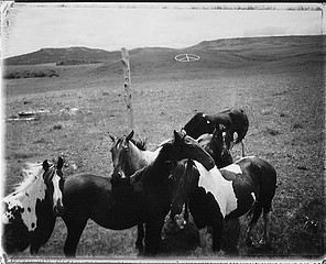 Drex Brooks: Horses and Peace Sign, Blackfeet Reservation, Montana, 1995