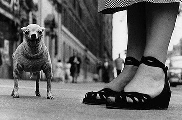 Elliott Erwitt: Chihuahua.  New York City, 1946