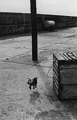 Elliott Erwitt: Dog jumping.  Ballycotton, Ireland, 1968