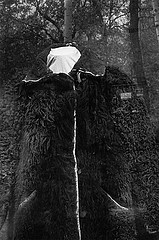 Gary Cawood: Fur Coat, 1993