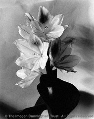 Imogen Cunningham: Blossom, Water Hyacinth 2, '20s