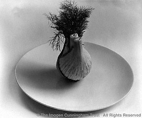 Imogen Cunningham: One Vegetable, 1946