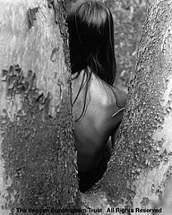 Imogen Cunningham: Through the Tree Humblt , 1968
