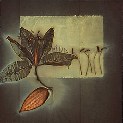 James Hajicek & Carol Panaro-Smith: Botanical/06-5