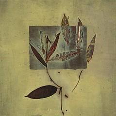 James Hajicek & Carol Panaro-Smith: Botanical/06-4