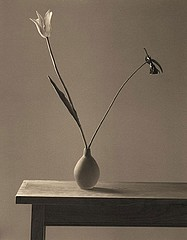 James Pitts: French Tulip and Calladium, 1995
