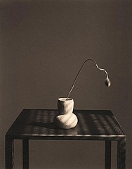 James Pitts: Poppy Bud on Steel Table, Summer 1997