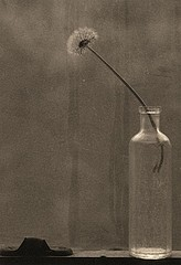 James Pitts: Dandelion