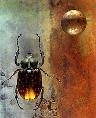 Jo Whaley: Coleoptera