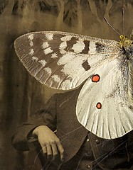Jo Whaley: <i>Parnassius apollo</i>