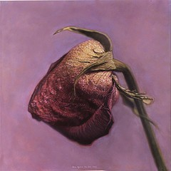 Kate Breakey: Hybrid Rose Bud, 1997