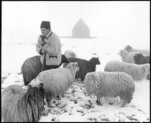 Kathleen Laraia McLaughlin: The Shepherd, Ocna Sugatag, Romania, 2000