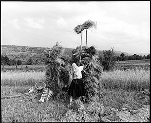 Kathleen Laraia McLaughlin: Drying the Harvest, Sarbi, Romania, 2000