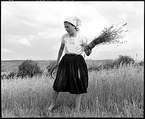 Kathleen Laraia McLaughlin: The Harvest, Sarbi, Romania, 2000