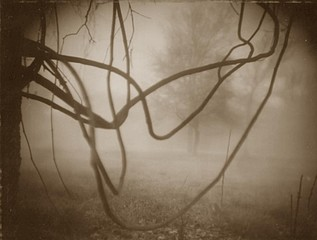 Kay Denton: Fog and Vines, 2004