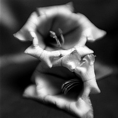 Keith Carter: Two Moonflowers