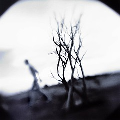 Keith Carter: Darwin's Dream