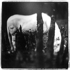 Keith Carter: Unicorn, 1997