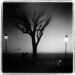 Keith Carter: Lampposts, 1998