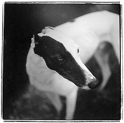 Keith Carter: Black & White, 1997